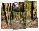 Fall Trees (Bloomington, Indiana 29 October 1991)