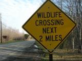 Wildlife Crossing Next 2 Miles near Morristown NJ.JPG