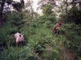 Rhino, Chitwan National Park, Nepal (1995)