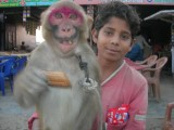 Child, Monkey, and Biscuit