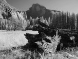 Half Dome (infrared) from Cook's Meadow