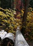 3 Logs