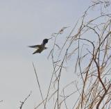 Hummingbird looking for ?