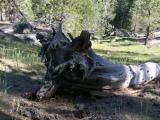 Near Little Yosemite trail intersection