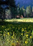 Morning meadow near El Capitan