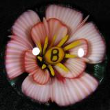 Number Five (5)  Letter B