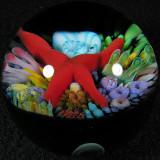 Starfish Amputee