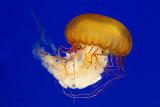 aquarium - IMGP8900.jpg