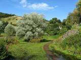 Duddingston Loch side