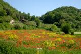 Spain - Wildlife of Olot - Garrotxa
