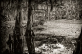 Caddo Lake, Spring 2012 to present