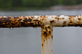 The rusty fence