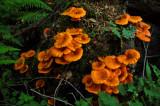 Mushrooms in Shenandoah National Park