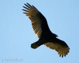 backlit wings_NIK3086.jpg
