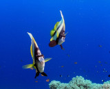 Bob's Red Sea Photos:  Dreaming with the fishes