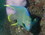 Diving '98 Reef Balls' - Aug 09