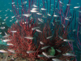 GW Soft Corals 2.jpg