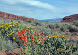 Lots of flowers in Arches due to snows in the winter, and rain 2 weeks before we arrived.