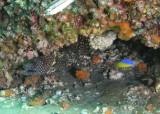 P6190054 35 reef balls.jpg