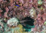 P6190074 35 reef balls.jpg