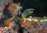 Progress Energy Reef (Shady Lady Shrimpboat)