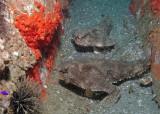 Clay Eubanks Memorial Reef