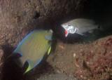 MB 58  98 Reef Balls