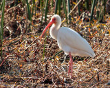 IMG_4308 ibis.jpg