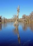 IMG_4361 wakulla river.jpg
