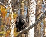 IMG_4426 vulture.jpg