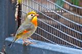 Caged Birds 2011