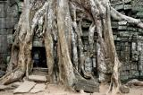 the root entering between the stone of the temple, while enlarging, keeps destroying the ruins