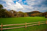 Fenced beauty