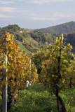Vineyard in Samoborsko Gorje