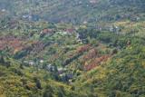 Mecsek Hills