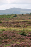 Towards Slieve Gullion, from Black Mountain