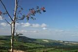 Brandon Hill, near Graiguenamanagh