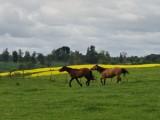 Horses near San Pablo