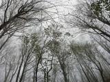 Winter trees, above Supljara Cave