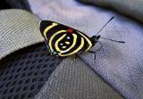 Butterfly on my backpack, Iguazu