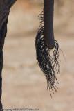 eletail