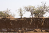 Bank of the dry Limpopo River where the Bee-eaters make their holes