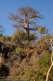Baobab high on a hill