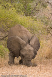 I have no idea what this elephant is doing!