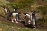 A little penguin fight