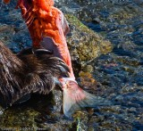 BF Not to gross anyone out, but after the bear kills the fish he skins it and then eats it.