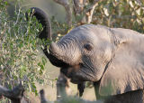 MM baby eles are so cute.