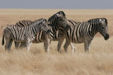 Zebras are like snowflakes with no 2 patterns alike.  Look at the rump of the little guy. I've never seen that before.