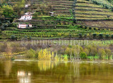 Vineyards and Douro's flood