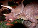 VMNH VA Museum of Natural History